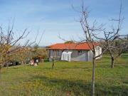 CASA A SENIGALLIA : Sulla prima collina casa in cemento armato di mq 130 con tetto ventilato, internamente da suddividere e terreno di mq 8000 con pozzo artesiano, 60 ulivi e alberi da frutto. Vista mare. Trattative in agenzia